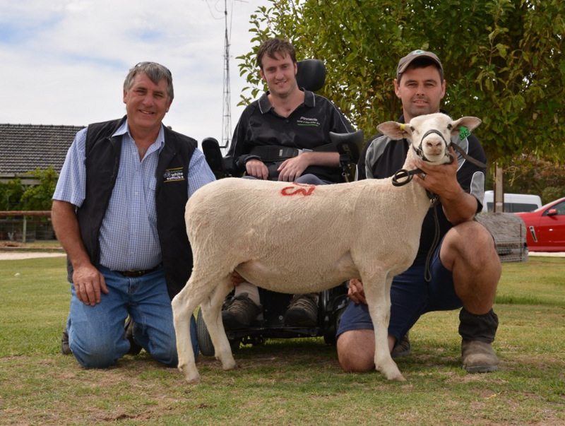 Top priced Ewe 2014 Bundara Downs Bi-Annual Mated Ewe Sale